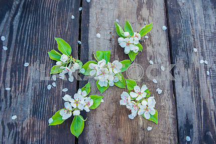 spring blooming apple tree twig on the boards (planking), flat lay, with lime leafs. flower petals