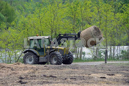 Tractor with hay for the cattle on the bucket