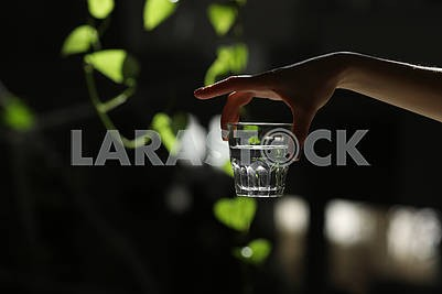 Woman hands isolated, holding a glass of water on a dark background with green leaves. the sun's rays fall on the glass. healthy morning