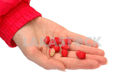 The collected wild strawberry
