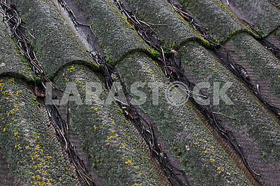 Old slate roof covered with moss