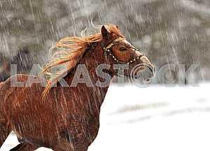 Winter. Horse. Snow