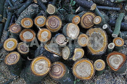 A pile of logs in the garden