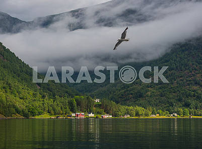 Gulls over the fjord
