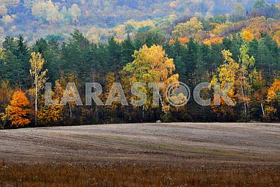 Field and autumn forest